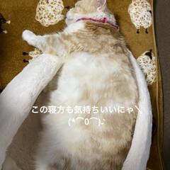 こむぎ/せんぶちょは?/動物大好き/猫大好き おはようございます(^-^)/  今朝も…(2枚目)