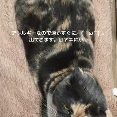 朝/部長🐽/入浴剤/ソープフラワー/母の日/猫/... おはようございます^ - ^ 今朝のせん…(2枚目)