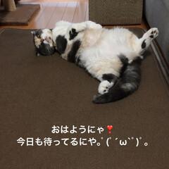 おっぴろげ/部長🐽/令和元年フォト投稿キャンペーン/フォロー大歓迎 おはようございます☔️ 西日本も梅雨❓ …