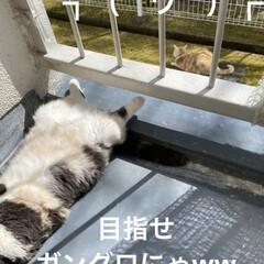 お友達/黒猫ちゃん/ベランダ/日焼け/こむぎ/せん/... お天気☀️.°良くなり せんぶっちょのマ…(3枚目)