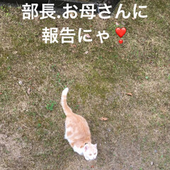 ダラダラ/パトロール/こむぎ課長/せん部長/猫/雨季ウキフォト投稿キャンペーン/... おはようございます^ ^ 台風発生3号💨…(5枚目)