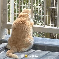 花/お友達待ち?/あじさい/桜/スコテッシュフォールド おはようございます(≧∇≦)/ 昨日は雨…(4枚目)