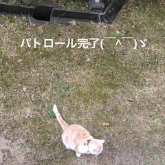 ダラダラ/パトロール/こむぎ課長/せん部長/猫/雨季ウキフォト投稿キャンペーン/... おはようございます^ ^ 台風発生3号💨…(4枚目)