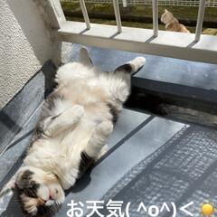 お友達/黒猫ちゃん/ベランダ/日焼け/こむぎ/せん/... お天気☀️.°良くなり せんぶっちょのマ…(1枚目)
