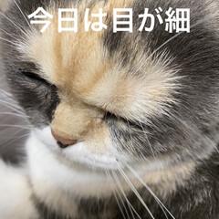 抗生物質💉/ステロイド💉/こむぎが元気ないです/こむぎ課長/せん部長/猫バカ おはようございます(*´∇`*) 今日は…