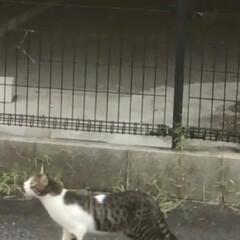 貝塚市/泉佐野/岸和田市/迷い猫 迷い猫さん(´;ω;`) 買主さん心配し…