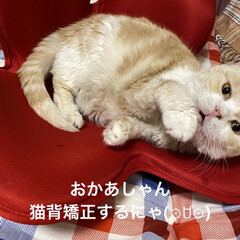 猫壱 バリバリボウル 猫柄 丸型爪とぎベッド | 猫壱(その他ペット用品、生き物)を使ったクチコミ「こんばんは🌙*.。★*゚ 今日も1日お疲…」(2枚目)