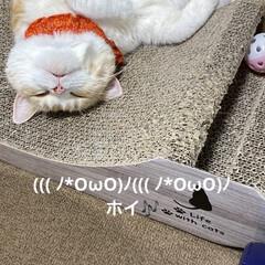動物大好き/猫大好き/最終調整/こむぎ課長/👻ダンス/☠🎃HappyHalloween🍭🍬 おはようございます🎃🦇🕸  こむぎ課長(…(3枚目)