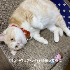 猫大好き/動物大好き/南瓜/せんぶちょ/こむぎ課長/👻🎃HAPPY HALLOWEEN🎃👻 👻🎃HAPPY HALLOWEEN🎃👻🎃…
