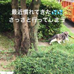 こむぎ課長/せん部長/散歩/犬猫以外もいいぞ派/猫派/犬派/... おはようございます☀ 台風も💨近づいてま…(2枚目)