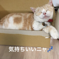 朝/課長/部長🐽/猫/フォロー大歓迎/GW おはようございます♪( ´▽`) 今日も…(1枚目)