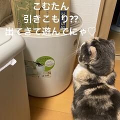 箱に引きこもり/動物大好き/猫大好き/こむぎ課長/せんぶちょ おはようございます♡  今日もせんぶちょ…(1枚目)