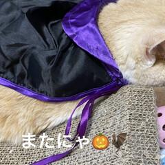 猫大好き/動物大好き/南瓜/せんぶちょ/こむぎ課長/👻🎃HAPPY HALLOWEEN🎃👻 👻🎃HAPPY HALLOWEEN🎃👻🎃…(3枚目)