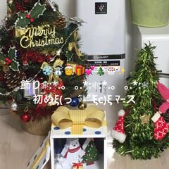 スコティッシュフォールド/こむぎ/せん/白木にしょうかな?/飾り/クリスマス/... おはようございます٩(*´꒳`*)۶ 少…