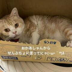 箱に引きこもり/動物大好き/猫大好き/こむぎ課長/せんぶちょ おはようございます♡  今日もせんぶちょ…(4枚目)