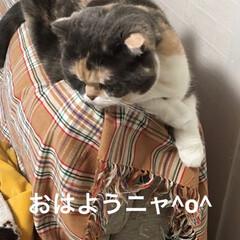 見た/課長/朝/部長🐽/猫/フォロー大歓迎/... おはようございます♡ 今日からお仕事の方…(2枚目)