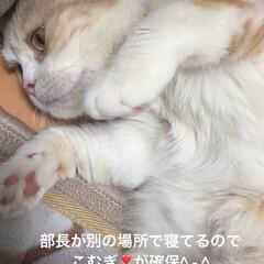 ペット仲間募集/猫 今部長🐽は違う場所で寝てるので こむぎ❣…