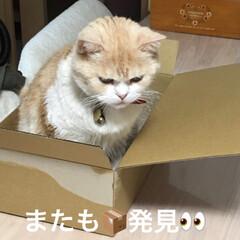 おやすみショット/ペット/猫 こんばんは🌆 今日も一日お疲れ様でした(…