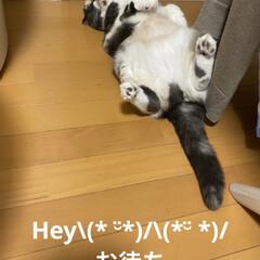 動物好き/ねこ好き/せんぶちょ/こむぎ/足の指ぶつけた おはようございます(*´∇`)  今朝も…