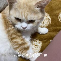 可愛いにゃ/動物大好き/猫大好き/こむぎ課長/せんぶちょ おはようございます(´∀`*) せんぶち…(1枚目)