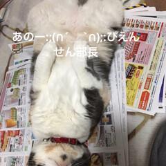 せん部長/おっぴろげ/ひらき/生協のカタログ/見たい/フォロー大歓迎 おはようございます✿゚❀.(*´▽`*)…
