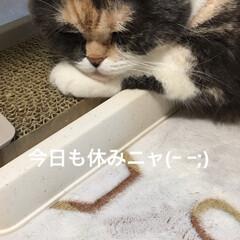 朝/課長/部長🐽/猫/フォロー大歓迎/GW おはようございます♪( ´▽`) 今日も…(2枚目)