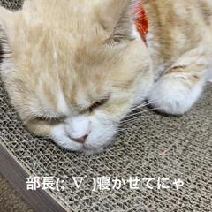 動物大好き/猫大好き/親バカ/会話/こむぎ課長/せんぶちょ おはようございますヽ(^0^)ノ  今朝…(2枚目)