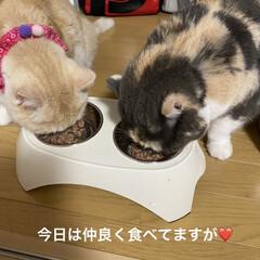 動物病院/CTEハミガキペースト/動物大好き/猫大好き/仲良くご飯/こむぎ課長/... おはようございます( ´ ▽ ` )  …