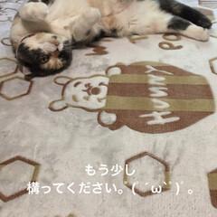ナデナデポーズ/構って/日課/猫/せん🐽部長/フォロー大歓迎/... 撫でて動いて頑張ってるお母さん。゚(゚´…