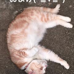 こむぎ課長/せん部長/散歩/犬猫以外もいいぞ派/猫派/犬派/... おはようございます☀ 台風も💨近づいてま…(7枚目)