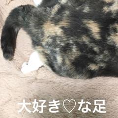 朝/部長🐽/入浴剤/ソープフラワー/母の日/猫/... おはようございます^ - ^ 今朝のせん…(3枚目)
