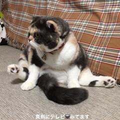 あけおめ/フォロー大歓迎/冬/おうち/ペット/猫 🐶ちゃん🐱ちゃんが いっぱい紹介されてる…