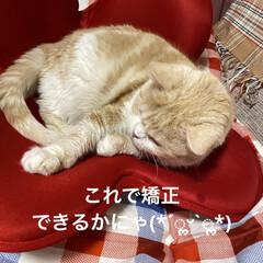 猫壱 バリバリボウル 猫柄 丸型爪とぎベッド | 猫壱(その他ペット用品、生き物)を使ったクチコミ「こんばんは🌙*.。★*゚ 今日も1日お疲…」(3枚目)