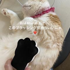 動物大好き/猫大好き/こむぎ課長/せんぶちょ/ブラッシング🐾 おはようございます( ´ ▽ ` )  …