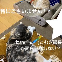 動物大好き/猫大好き/親バカ/会話/こむぎ課長/せんぶちょ おはようございますヽ(^0^)ノ  今朝…