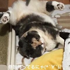 参加募集/猫/ヨガ/日曜日/部長🐽/LIMIAペット同好会/... おはようございます^ - ^ せん部長🐽…(2枚目)