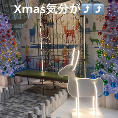 ʚ(,,・ω・,,)ɞキーホルダー/Xmasディスプレイ/フォロー大歓迎 周りも❄☃🎅🎁💕🎄🎂✨ Xmas気分も⤴…