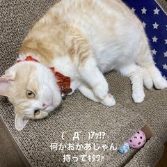 猫大好き/動物大好き/南瓜/せんぶちょ/こむぎ課長/👻🎃HAPPY HALLOWEEN🎃👻 👻🎃HAPPY HALLOWEEN🎃👻🎃…(2枚目)
