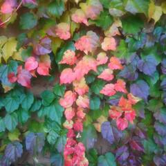 コンロ専用パネル/キッチン大好き。/小旅行/アイカ/プラスワンダー/対面キッチン/... ~秋の彩。~   最近、何故か、草花に目…