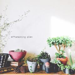 インダストリアル風/ブルックリンスタイル/ボタニカルインテリア/ボタニカルライフ/カフェ風インテリア/植物のある暮らし/... 最近は、植物をランダムに並べたい気分 _…