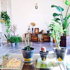 ボタニカル/ボタニカルライフ/植物のある暮らし/グリーンインテリア/塊根植物/多肉植物/... 植木鉢をペイント♪ 最近はグレー×ゴール…