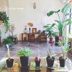 モルタル床/観葉植物/多肉植物/塊根植物/コーデックス/男前インテリア/... 植物たちの日光浴日和♪ かわえぇ。