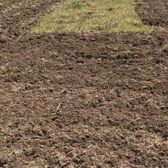 田植え準備スタート/ランチ 初めての試み  今年からお米作ります。 …