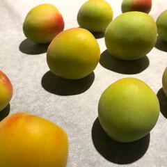 梅/梅仕事/料理/果実/梅シロップ/暮らし 梅の季節がやってきました。