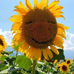 夏休み/夏/おでかけ 以前投稿させて頂きましたが、今回夏の思い…