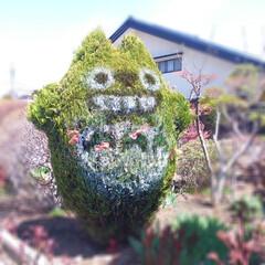 ガーデン/インテリア/建築 これは凄い!!トトロの木を見つけた(^-…