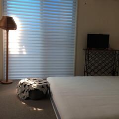 寝室/寝室インテリア/エアウィーブ/シルエットシェード 寝室にやってきたカーペットとシルエットシ…