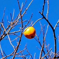 栃木/温泉旅行/温泉部/里山の風景/柿/鬼怒川/... 鬼怒川の里山の風景です😊 柿が青空に輝い…