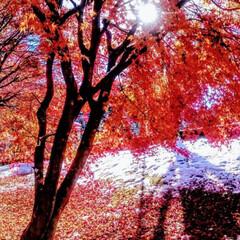 フォロー大歓迎/ペット/ペット仲間募集/犬/わんこ同好会/おでかけ/... 鬼怒川に雪が❄️紅葉と雪のコントラスト美…