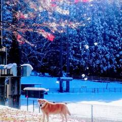 フォロー大歓迎/ペット/ペット仲間募集/犬/わんこ同好会/おでかけ/... 鬼怒川に雪が❄️紅葉と雪のコントラスト美…(3枚目)